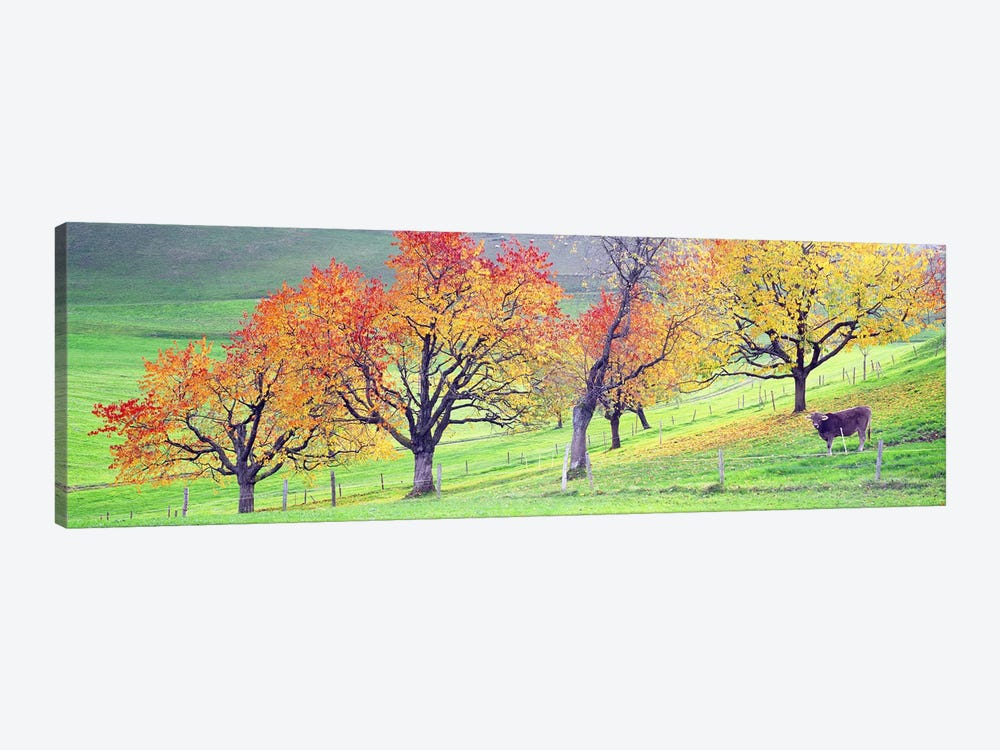 Cow Cantone Zug Switzerland by Panoramic Images 1-piece Canvas Print