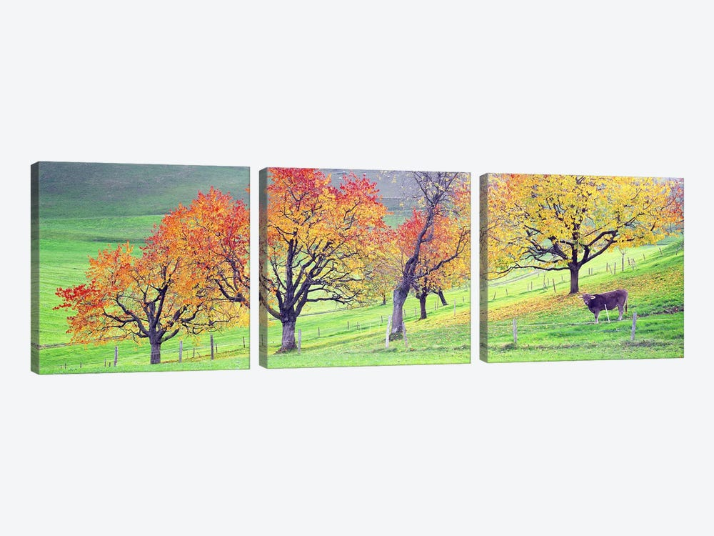 Cow Cantone Zug Switzerland by Panoramic Images 3-piece Art Print