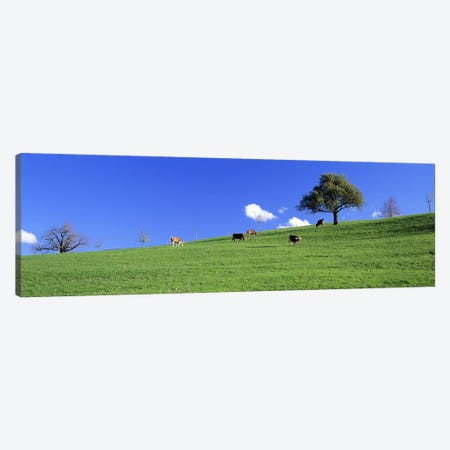 Cows, Canton Zug, Switzerland Canvas Print #PIM2693} by Panoramic Images Canvas Artwork