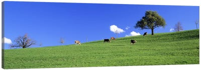 Cows, Canton Zug, Switzerland Canvas Art Print