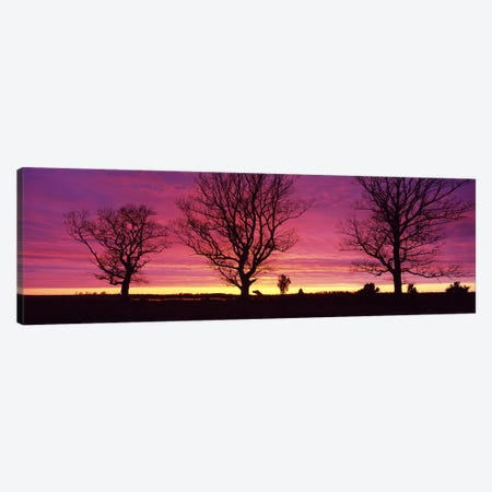 Oak Trees, Sunset, Sweden Canvas Print #PIM2698} by Panoramic Images Canvas Artwork