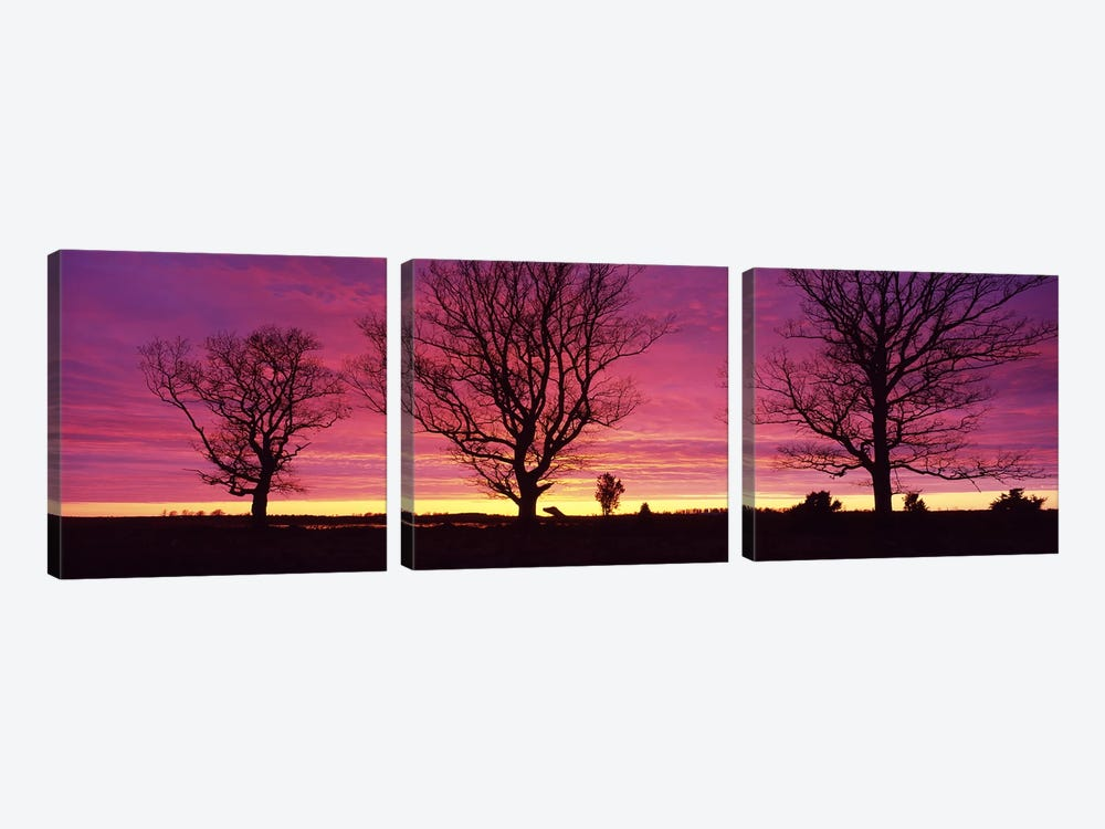 Oak Trees, Sunset, Sweden by Panoramic Images 3-piece Canvas Art Print