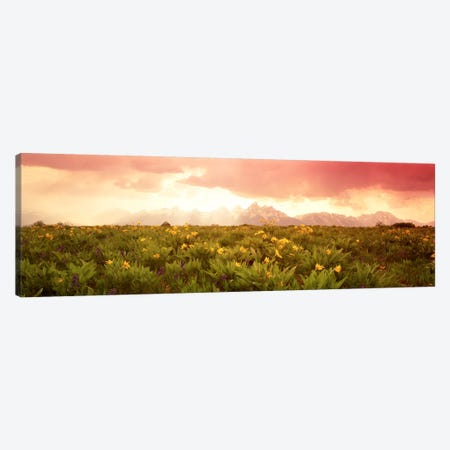 Wildflower Meadow, Grand Teton National Park, Wyoming, USA Canvas Print #PIM269} by Panoramic Images Canvas Wall Art