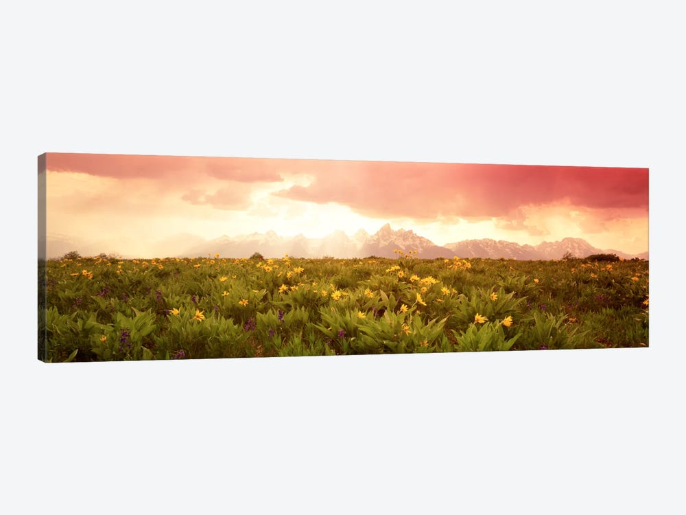 Wildflower Meadow, Grand Teton National Park, Wyoming, USA by Panoramic Images 1-piece Canvas Artwork