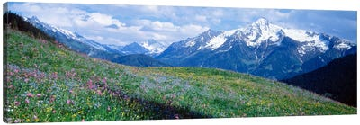 Mountainside Wildflowers, Zillertal Alps, Austria Canvas Art Print