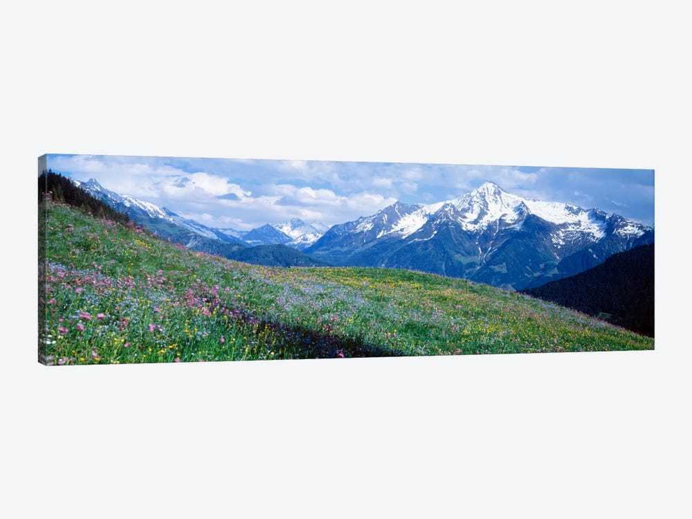 Mountainside Wildflowers, Zillertal Alps, Austria by Panoramic Images 1-piece Canvas Wall Art