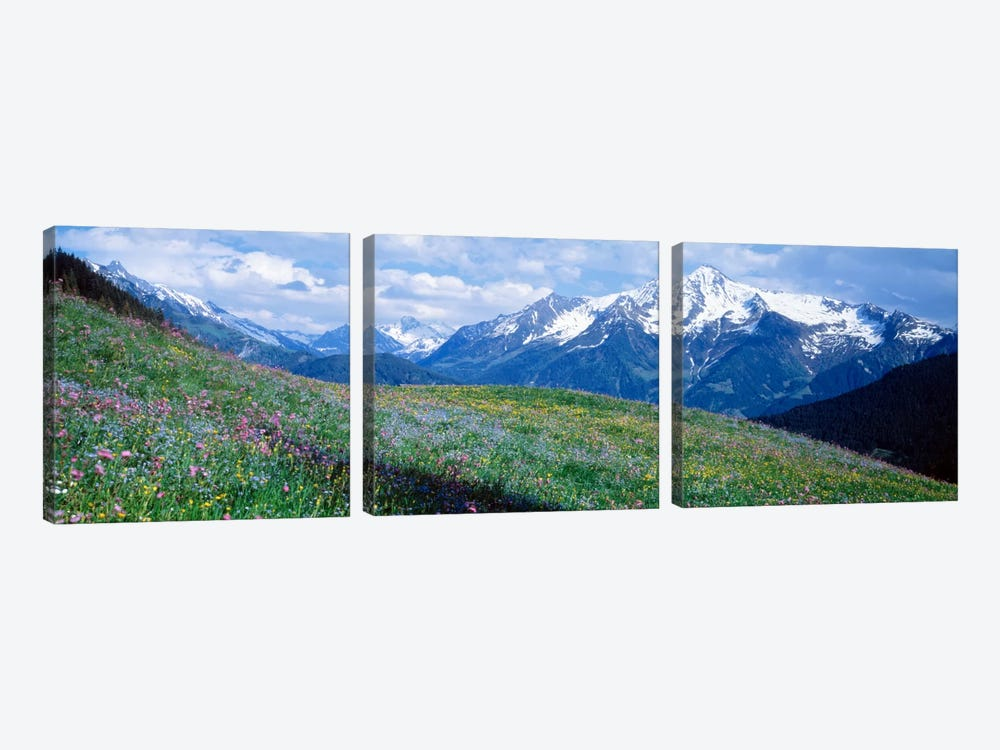Mountainside Wildflowers, Zillertal Alps, Austria by Panoramic Images 3-piece Canvas Artwork