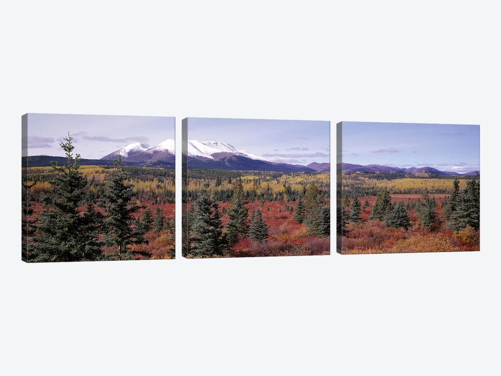 Forested Landscape, Yukon Territory, Canada by Panoramic Images 3-piece Canvas Print
