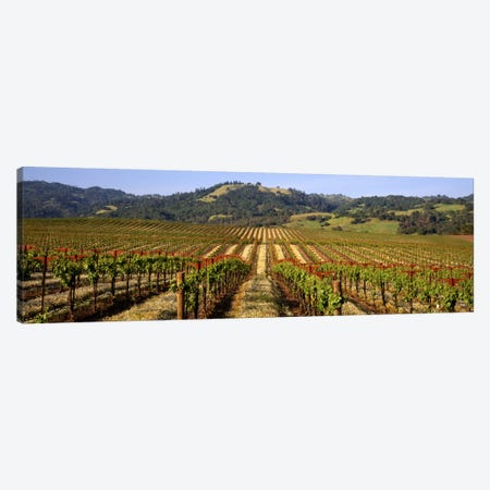 Vineyard, Geyserville, Dry Creek Valley, Sonoma County, California, USA Canvas Print #PIM272} by Panoramic Images Art Print