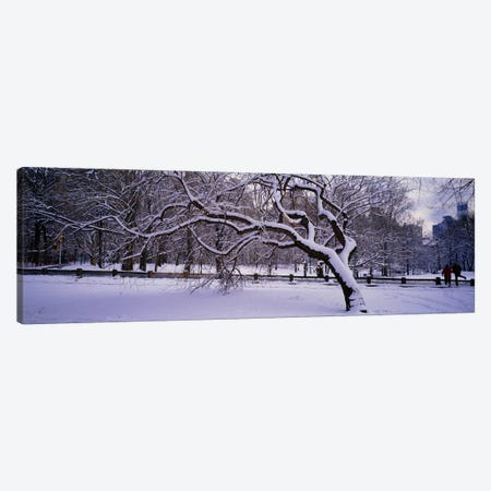 Trees covered with snow in a park, Central Park, New York City, New York state, USA Canvas Print #PIM2775} by Panoramic Images Canvas Wall Art