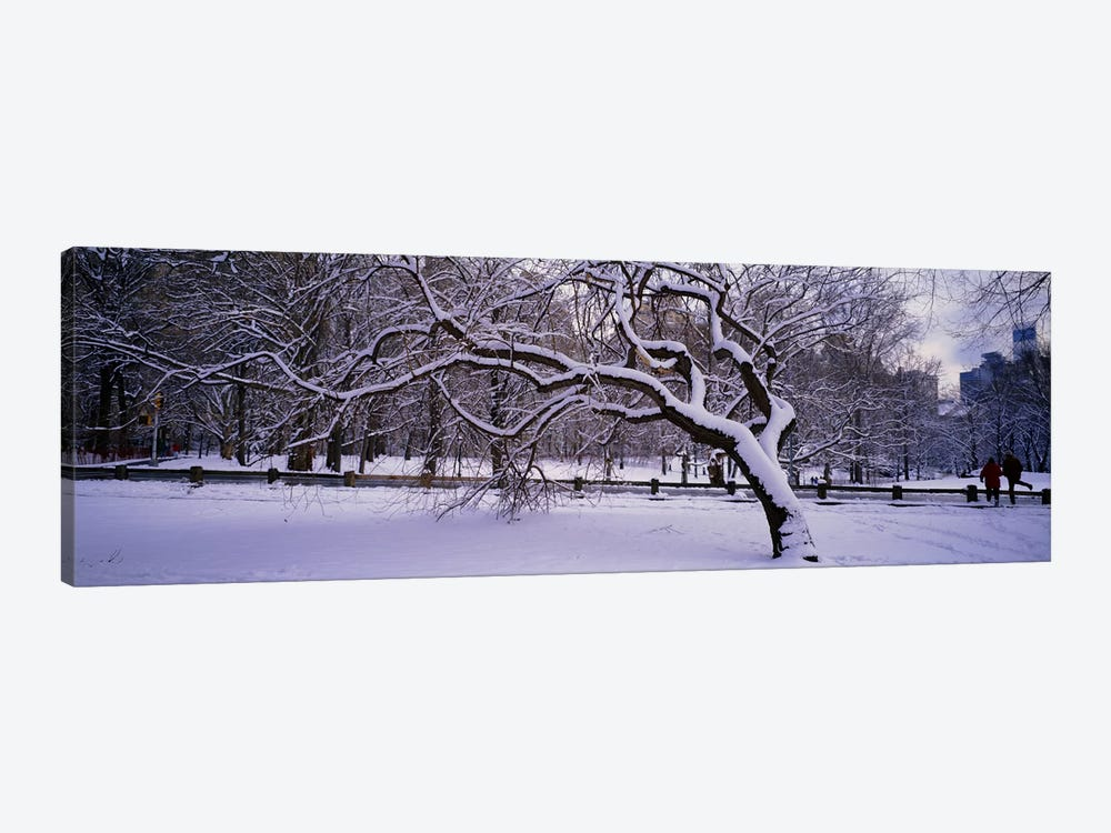 Trees covered with snow in a park, Central Park, New York City, New York state, USA by Panoramic Images 1-piece Canvas Art Print