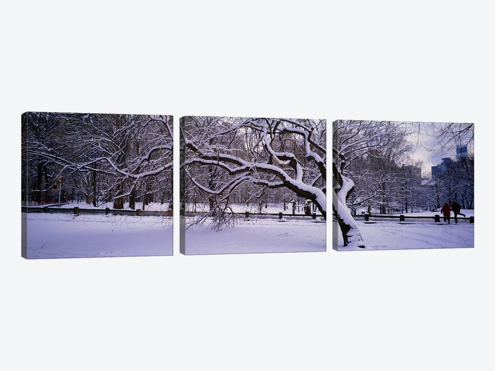 Trees covered with snow in a park, Central Park, New York City, New York state, USA by Panoramic Images 3-piece Canvas Art Print