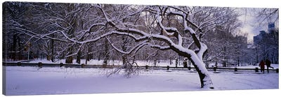 Trees covered with snow in a park, Central Park, New York City, New York state, USA Canvas Art Print