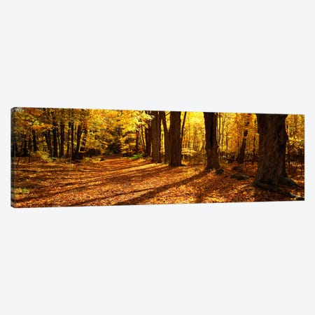 Tree Lined Road, Massachusetts, USA Canvas Print #PIM2797} by Panoramic Images Canvas Wall Art