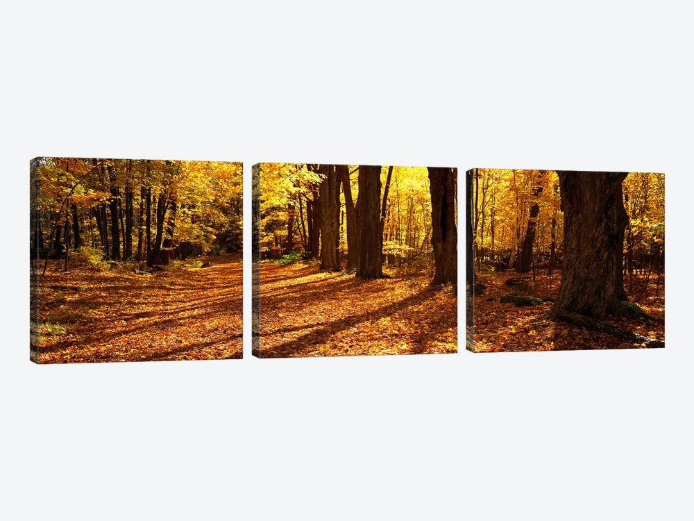 Tree Lined Road, Massachusetts, USA by Panoramic Images 3-piece Canvas Art Print