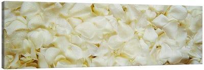 White Rose Petals Canvas Print #PIM2824