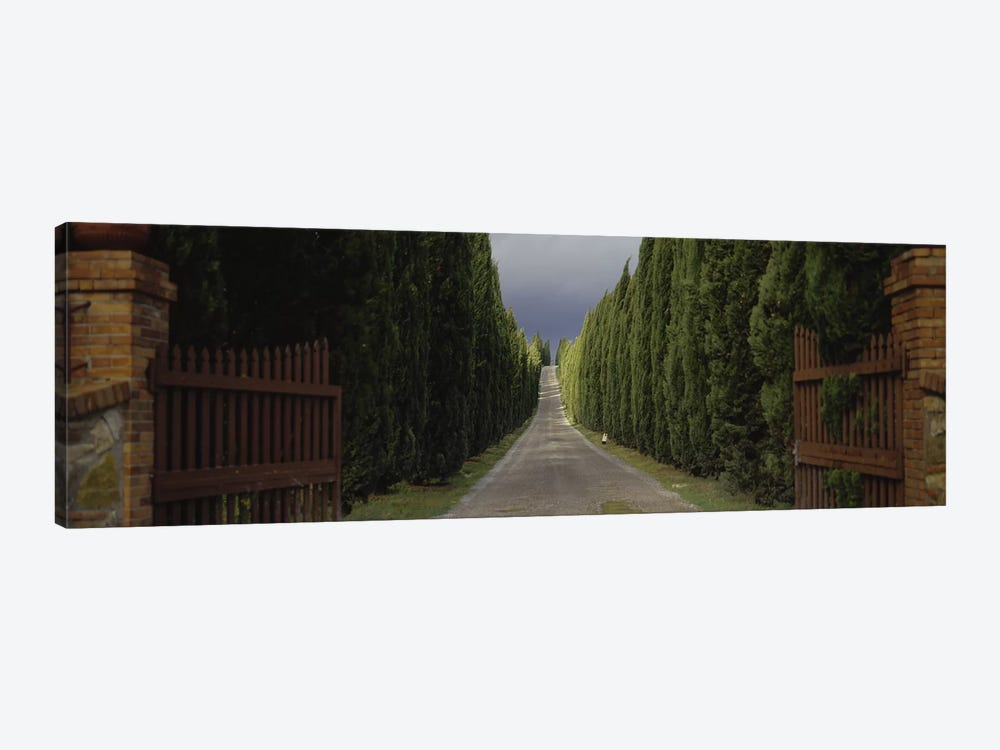 Tree-lined Country Road, Tuscany Region, Italy, by Panoramic Images 1-piece Canvas Print