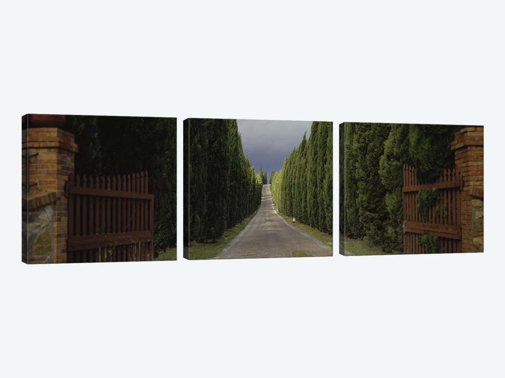 Tree-lined Country Road, Tuscany Region, Italy, by Panoramic Images 3-piece Art Print