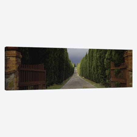Tree-lined Country Road, Tuscany Region, Italy, Canvas Print #PIM2839} by Panoramic Images Canvas Art