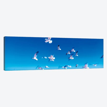 Birds in flight Flagler Beach FL USA Canvas Print #PIM284} by Panoramic Images Art Print