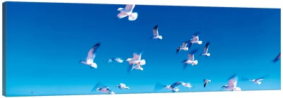 Birds in flight Flagler Beach FL USA Canvas Print #PIM284