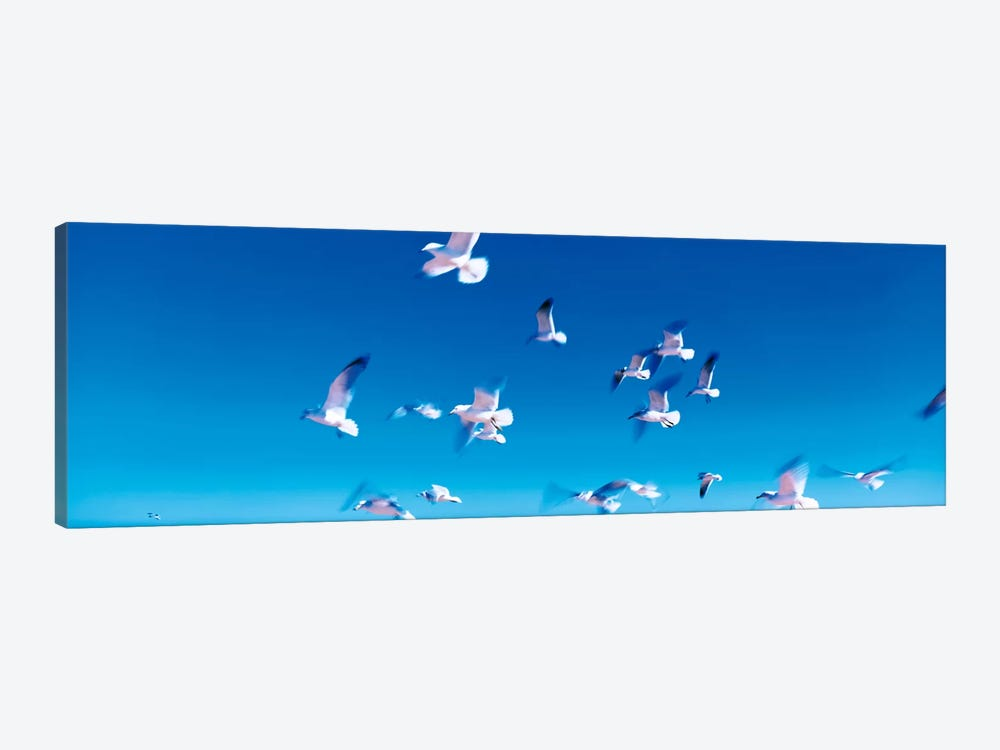 Birds in flight Flagler Beach FL USA by Panoramic Images 1-piece Canvas Art Print