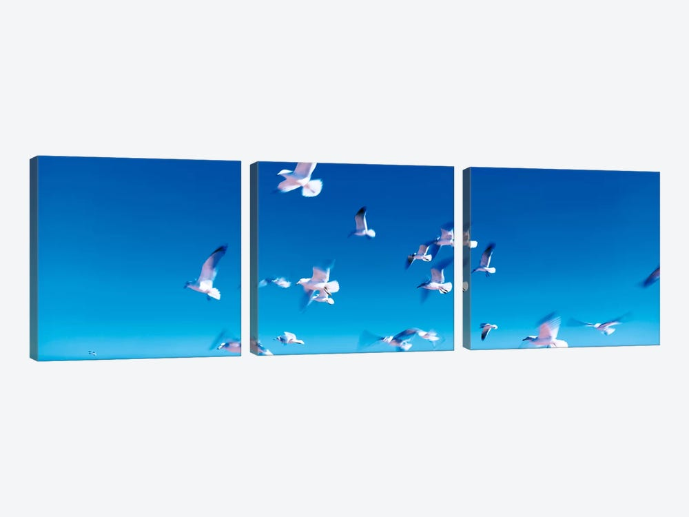 Birds in flight Flagler Beach FL USA by Panoramic Images 3-piece Art Print
