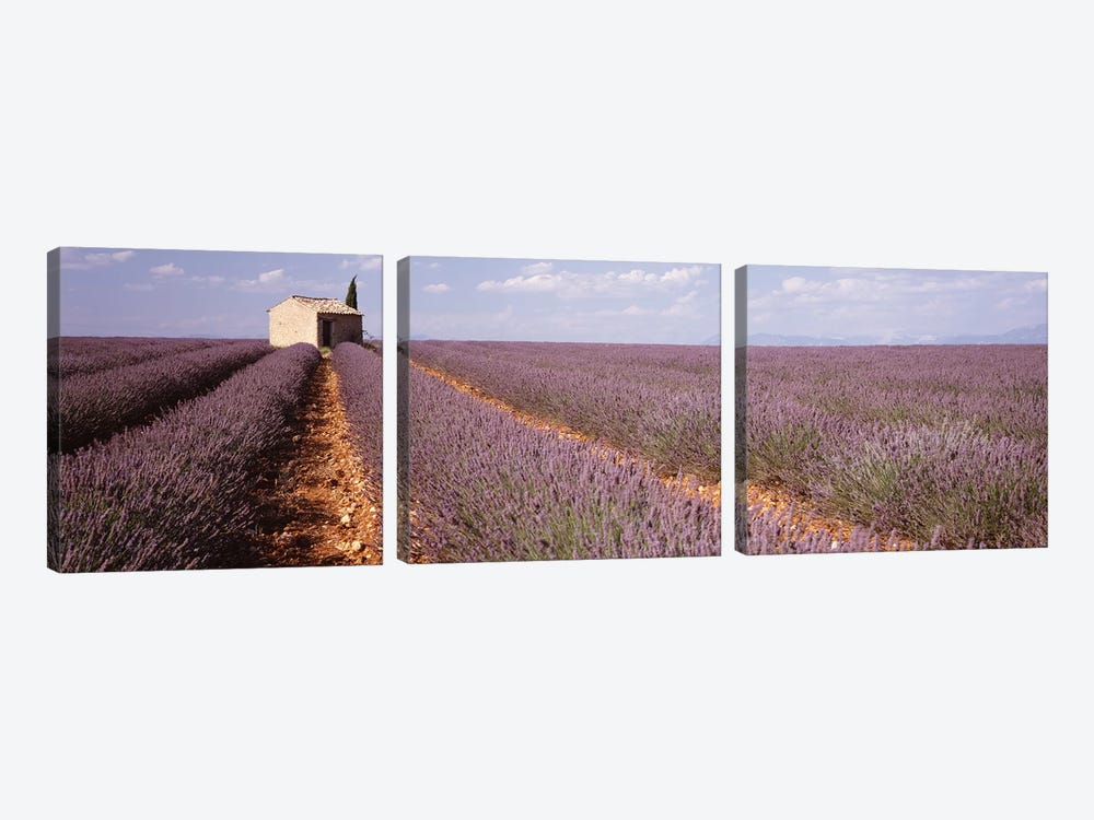 Lone Building In A Lavender Field, Valensole, Provence-Alpes-Cote d'Azur, France by Panoramic Images 3-piece Canvas Art Print
