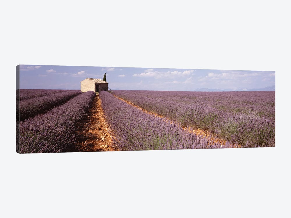 Lone Building In A Lavender Field, Valensole, Provence-Alpes-Cote d'Azur, France by Panoramic Images 1-piece Art Print