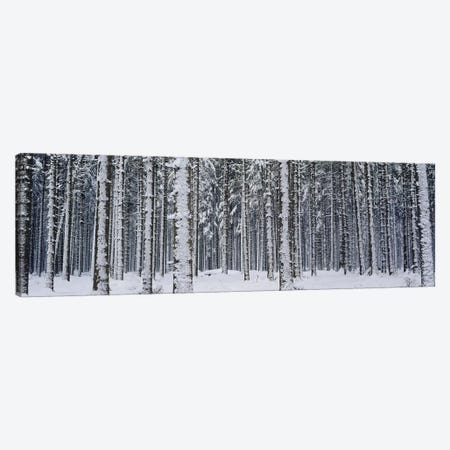 Snow covered trees in a forestAustria Canvas Print #PIM2883} by Panoramic Images Canvas Art Print