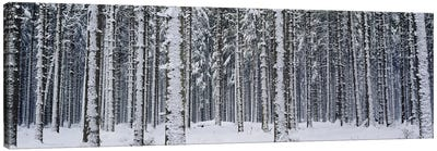 Snow covered trees in a forestAustria Canvas Art Print