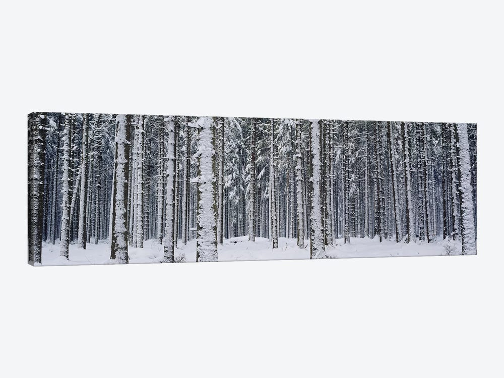 Snow covered trees in a forestAustria by Panoramic Images 1-piece Canvas Artwork