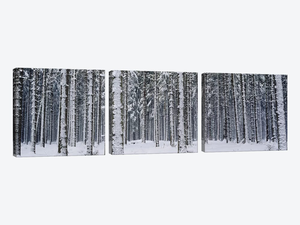 Snow covered trees in a forestAustria by Panoramic Images 3-piece Canvas Artwork
