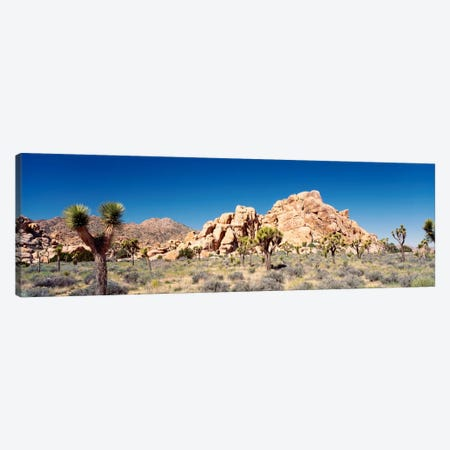 Rock Formation, Joshua Tree National Park, California, USA Canvas Print #PIM290} by Panoramic Images Canvas Art Print