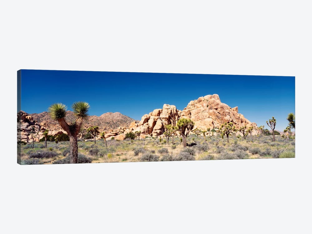 Rock Formation, Joshua Tree National Park, California, USA by Panoramic Images 1-piece Canvas Art