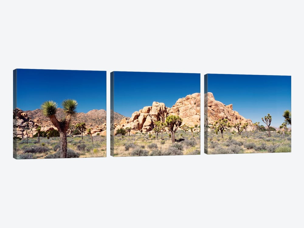 Rock Formation, Joshua Tree National Park, California, USA by Panoramic Images 3-piece Canvas Art
