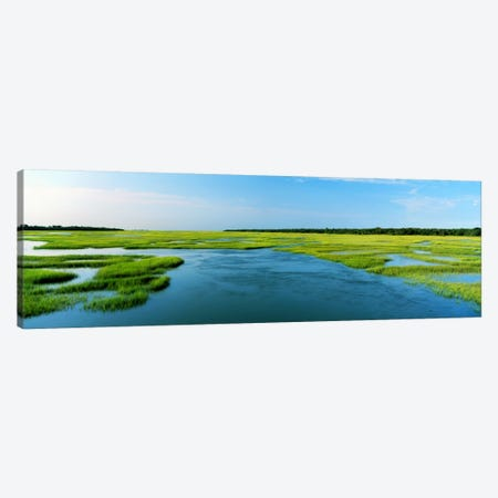Sea grass in the sea, Atlantic Coast, Jacksonville, Florida, USA Canvas Print #PIM292} by Panoramic Images Canvas Print