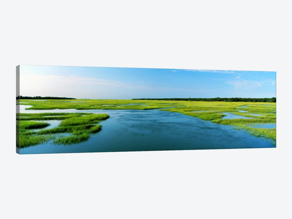 Sea grass in the sea, Atlantic Coast, Jacksonville, Florida, USA by Panoramic Images 1-piece Canvas Artwork