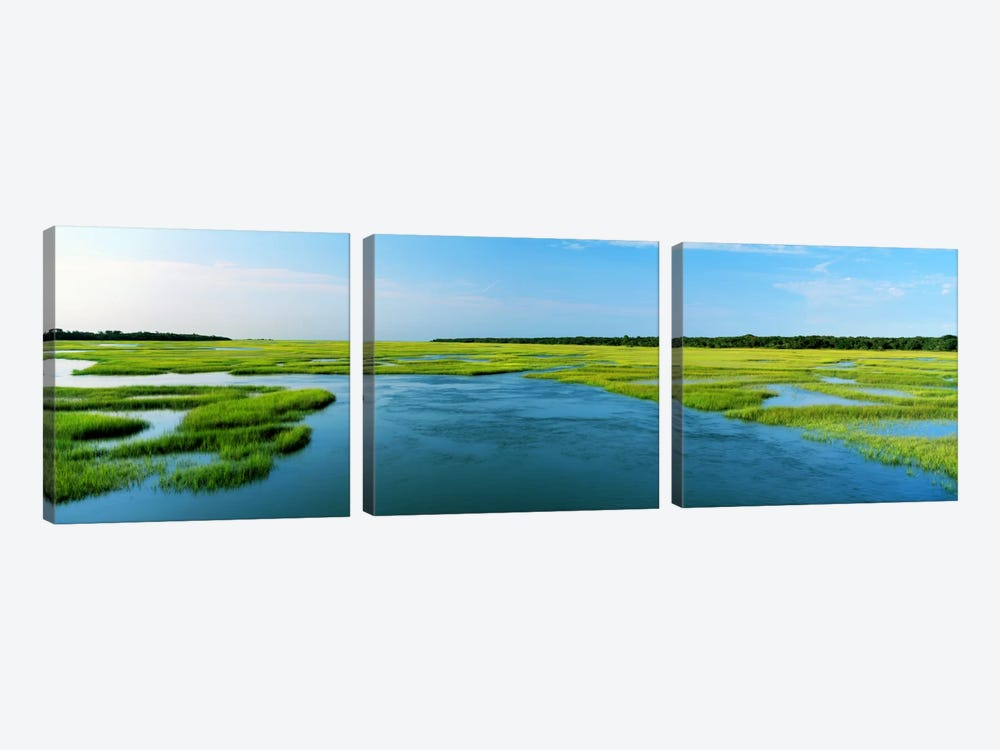 Sea grass in the sea, Atlantic Coast, Jacksonville, Florida, USA by Panoramic Images 3-piece Canvas Art