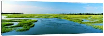 Sea grass in the sea, Atlantic Coast, Jacksonville, Florida, USA Canvas Art Print