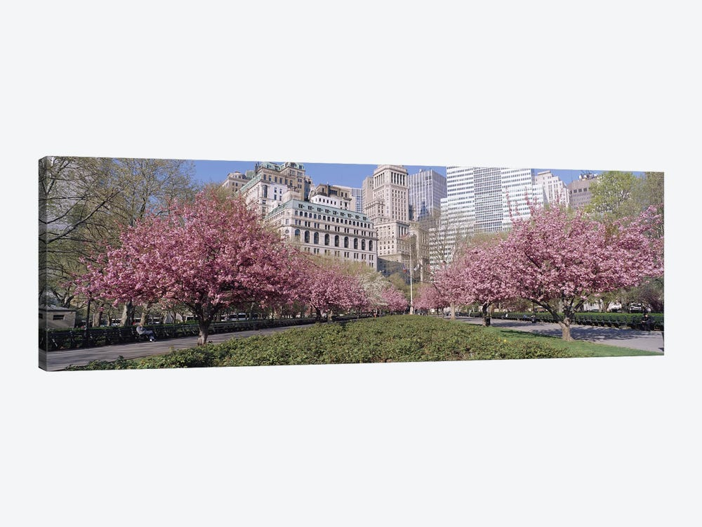 Cherry Trees, Battery Park, New York City, New York, USA 1-piece Canvas Art