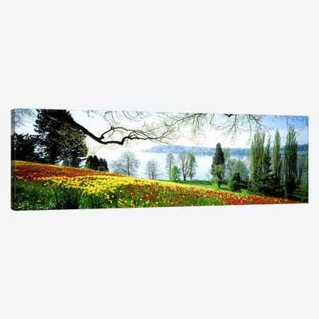 Flowers Near The Shoreline, Mainau (Flower Island), Germany Canvas Print #PIM2948} by Panoramic Images Canvas Wall Art