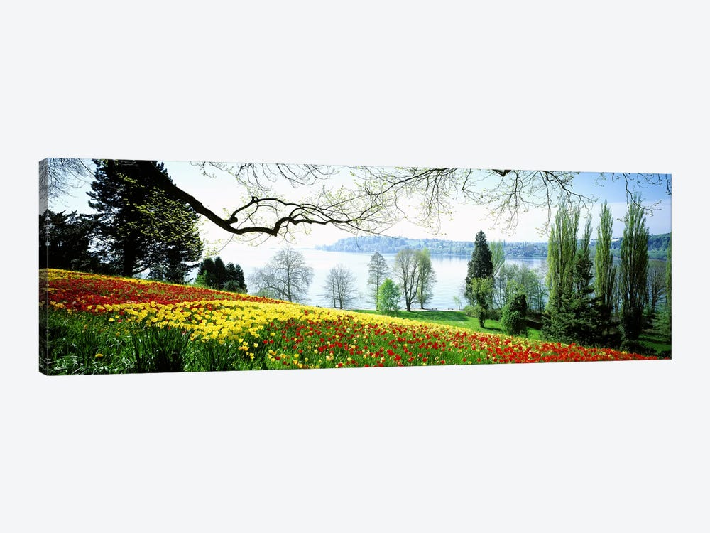 Flowers Near The Shoreline, Mainau (Flower Island), Germany by Panoramic Images 1-piece Canvas Artwork