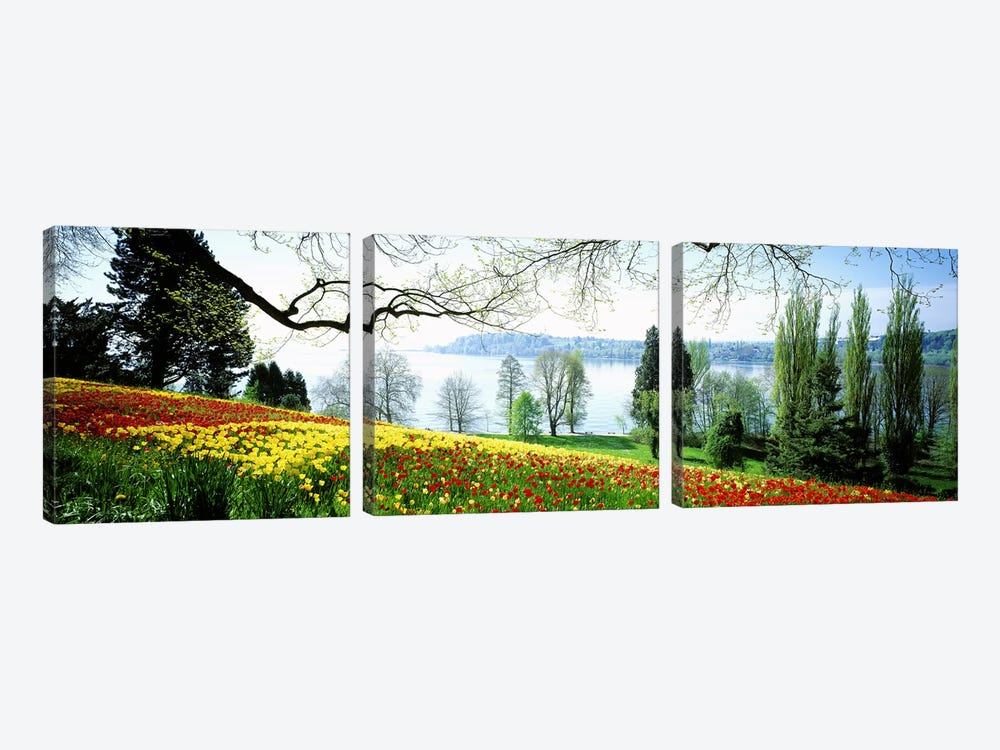 Flowers Near The Shoreline, Mainau (Flower Island), Germany by Panoramic Images 3-piece Canvas Wall Art