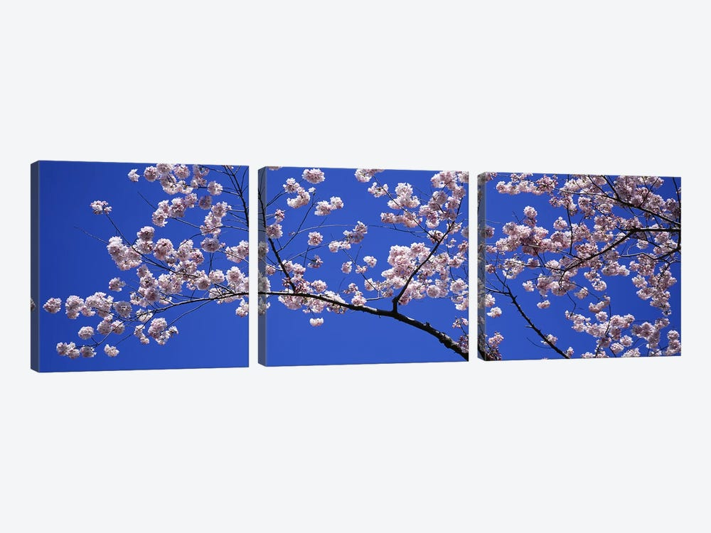 Cherry Blossoms Washington DC USA by Panoramic Images 3-piece Canvas Wall Art