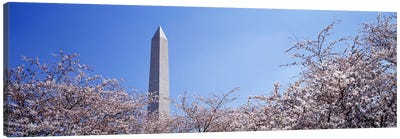 Washington Monument behind cherry blossom trees, Washington DC, USA Canvas Print #PIM2953