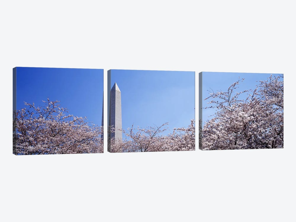 Washington Monument behind cherry blossom trees, Washington DC, USA by Panoramic Images 3-piece Canvas Artwork