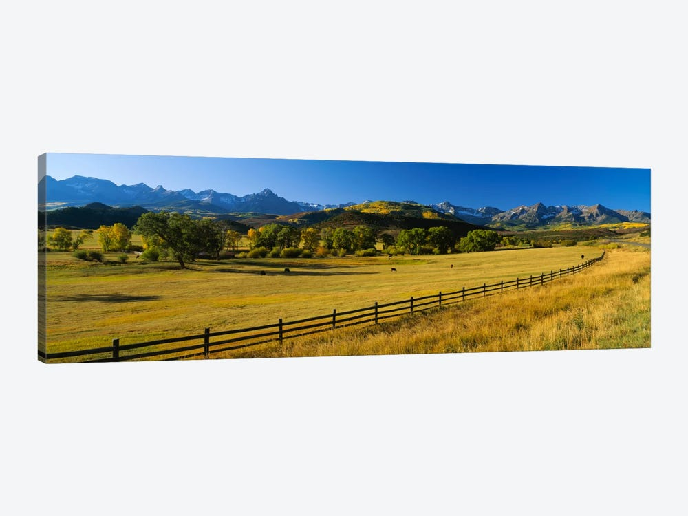 Trees in a field, Colorado, USA by Panoramic Images 1-piece Canvas Art Print