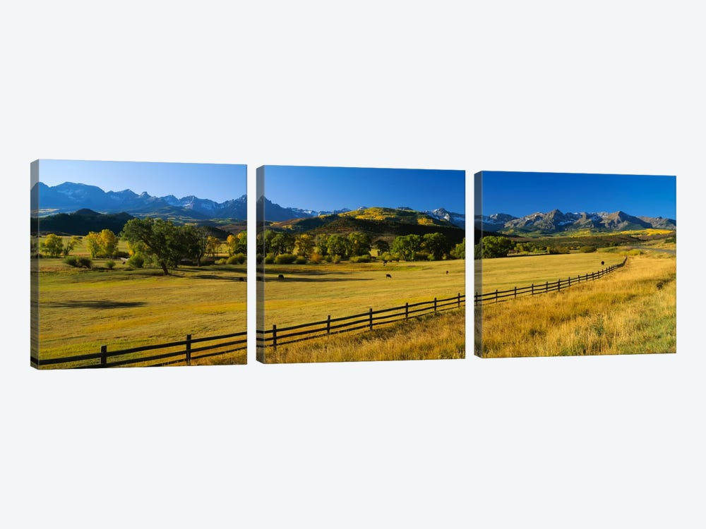 Trees in a field, Colorado, USA by Panoramic Images 3-piece Canvas Print