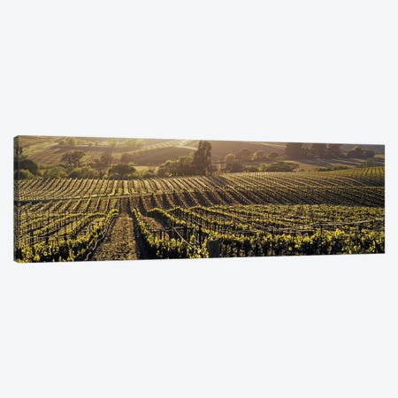Aerial View Of A Vineyard, Los Carneros AVA, California, USA Canvas Print #PIM2962} by Panoramic Images Canvas Art